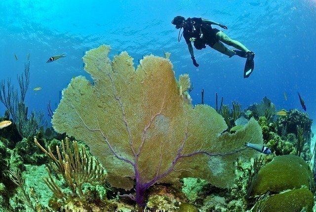 deep water diving certification school