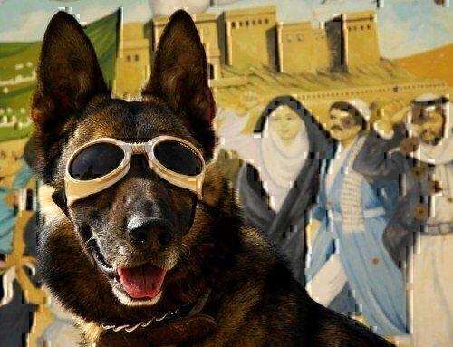 Service Dogs – Loyal Badasses