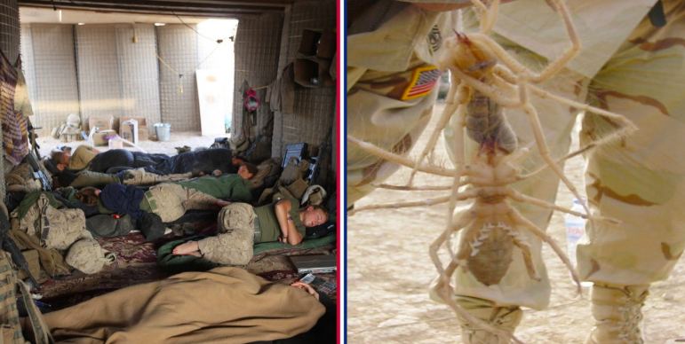 5 Ways Troops Defend Against Bugs