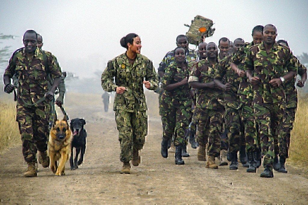 k9 unit dog veteran training