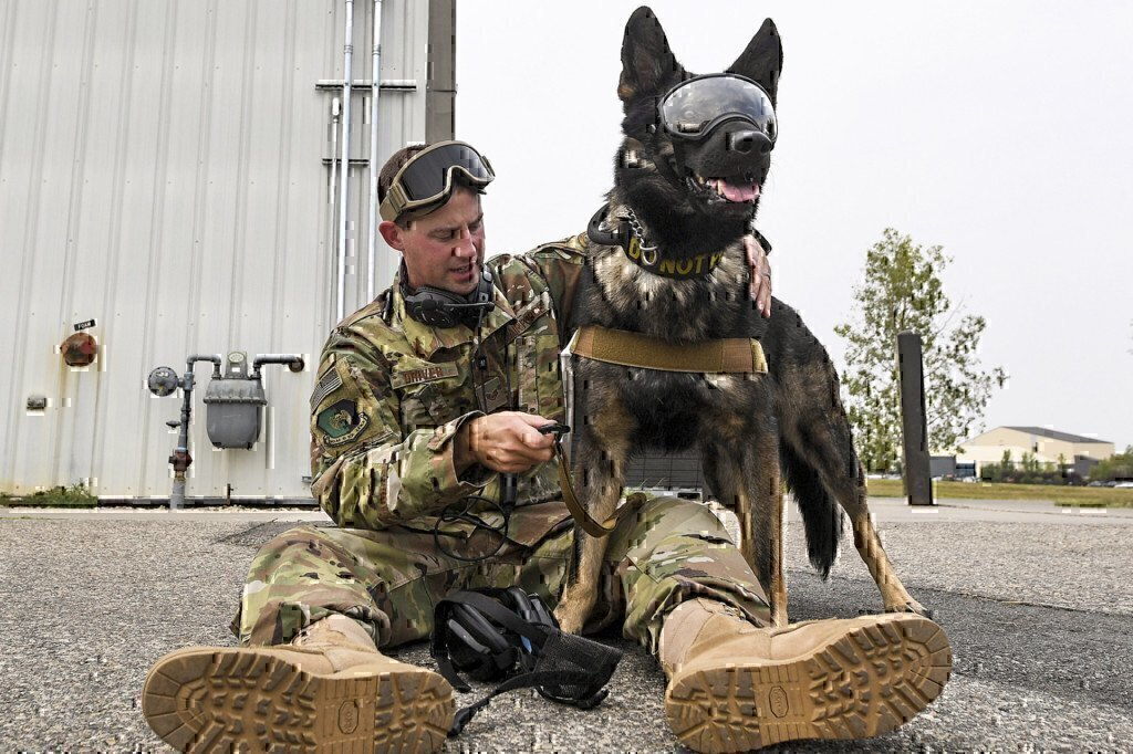 a dog with goggles on canine unit