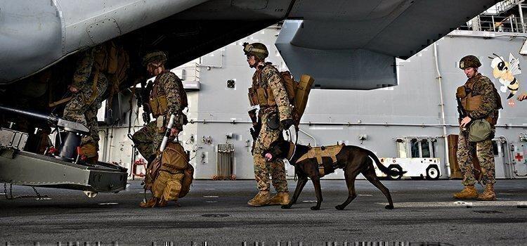 a marine dog going on an aircraft