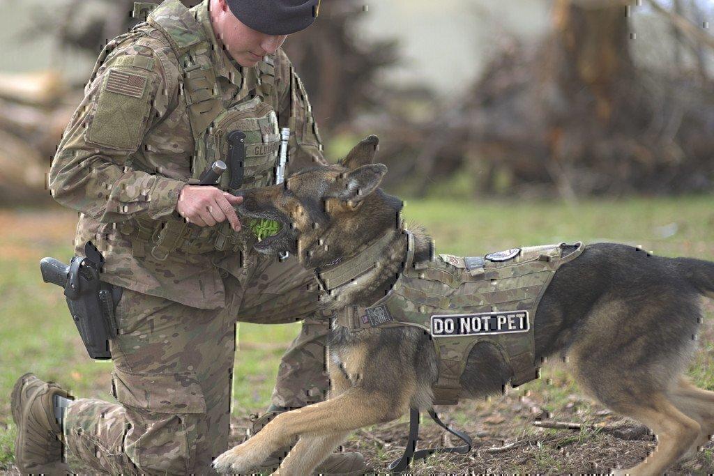 military working dog canine unit