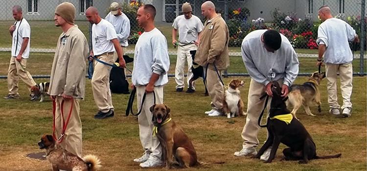 k9 unit dog training