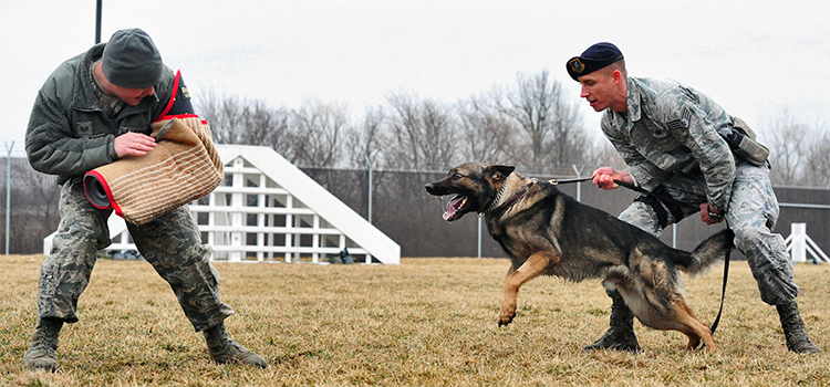 a k9 dog unit training in the military