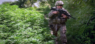 a soldier walking through a marijuana field