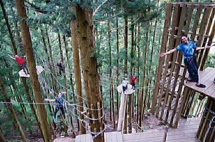 ropes-obstacle-course-forest