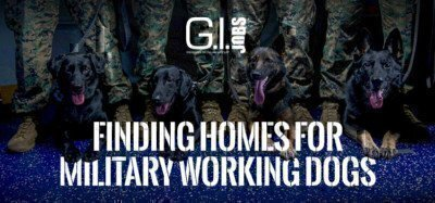 four-military-working-dogs