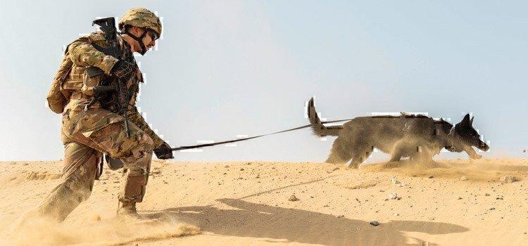sailor-walking-dog-kuwait