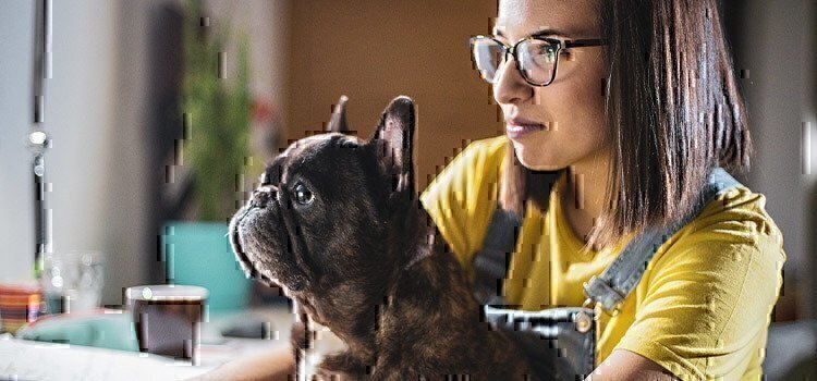 woman-with-french-bulldog